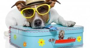 animali-vacanza-700x375