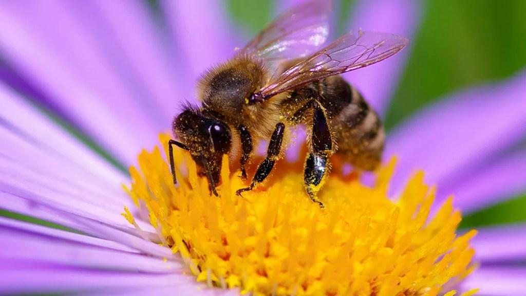 le api e i fiori