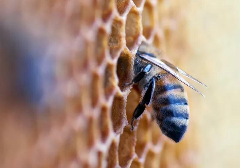 Le api in alveare