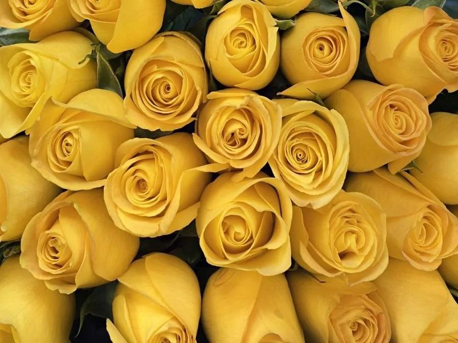 Colori, giallo