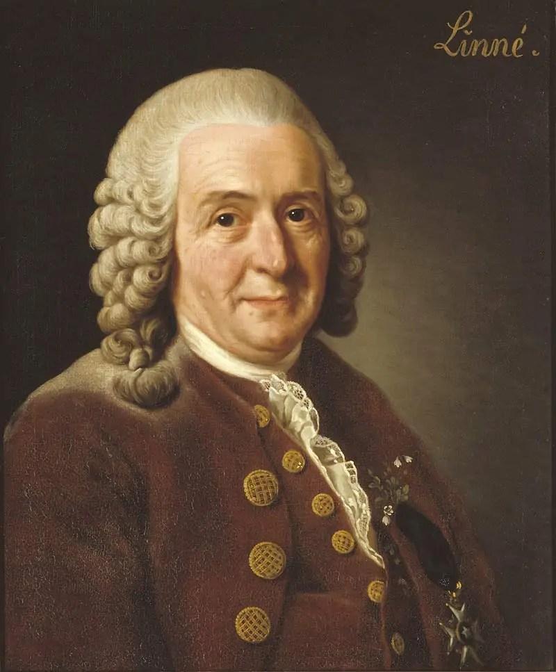 Carlo Linneo