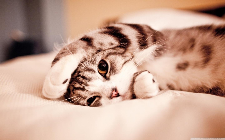 Lusta macska