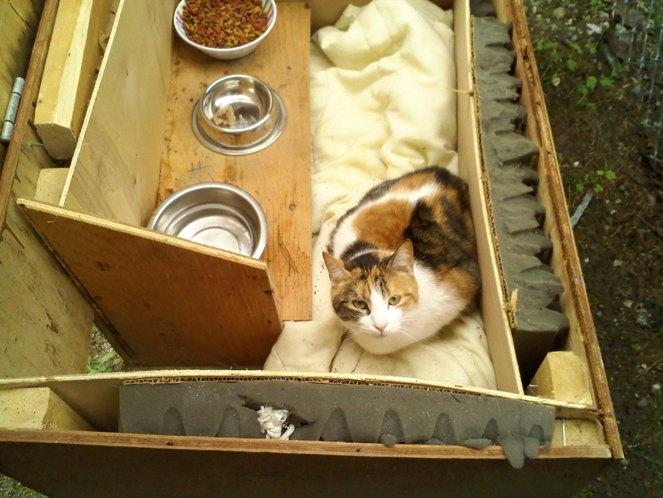 Forrás: https://www.sheltermeinc.org/keeping-outdoor-cats-warm-in-winter/