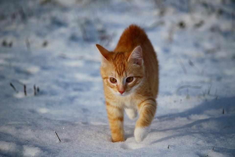 macska télen