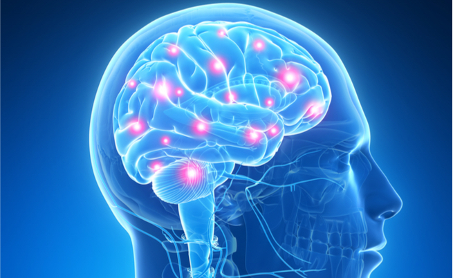 Il nostro cervello come funziona e come usarlo