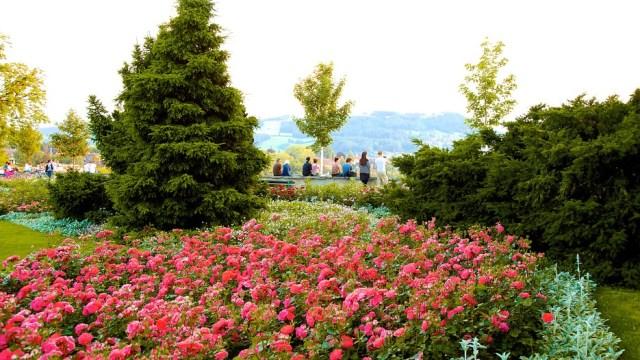 Розовата градина на Берн