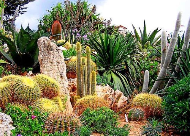 Екзотичната градина