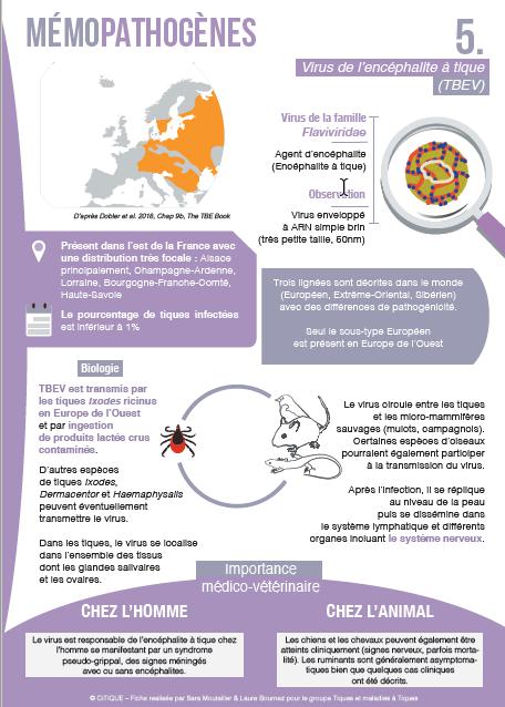 Fiche pathogène : Virus de l'encéphalite à tique (TEBCV)