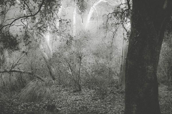 silver moment ©Robin Cohen