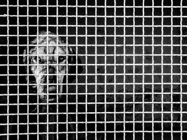 Quarantine ©Babak Gharaei
