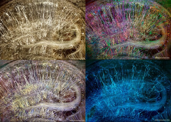 Brainbow Hippocampus Compilation