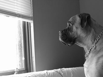 doggie2.jpg