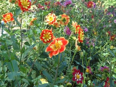 gardens12.jpg