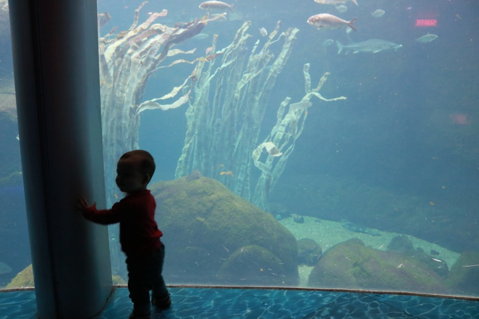 kids at the aquarium, discoure fish