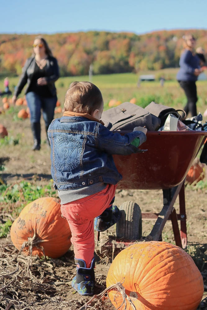 2017, fall fashion, mom style, casual style, pumpkin patch, family activity, orange, quebec, squash, toddler style