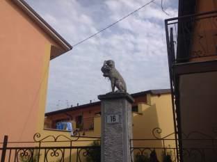 cane_cemento_pozzuolo