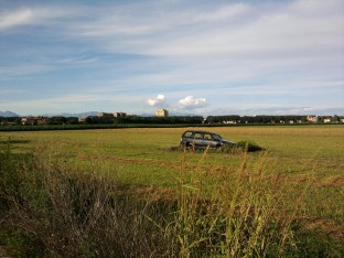 car_in_field