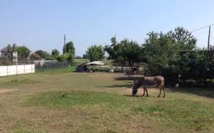 metropolitan_donkey