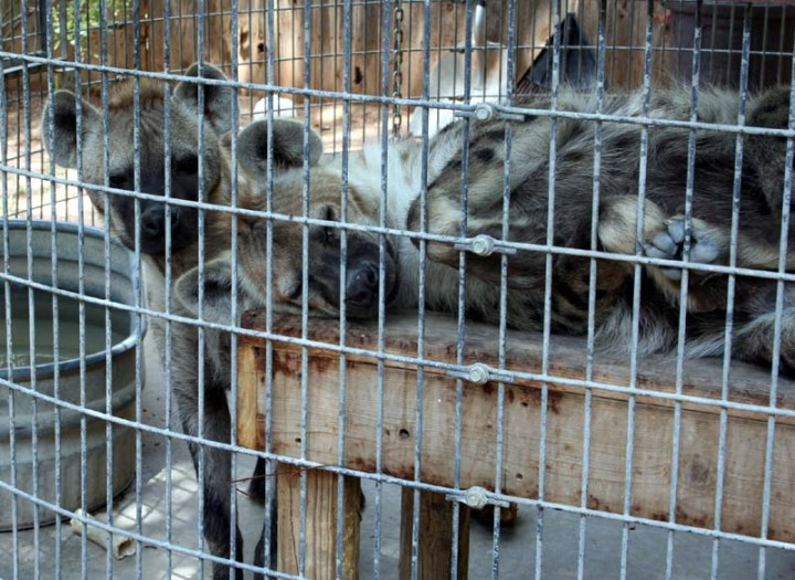 Should animals be kept in zoos  What are the pros and cons about     SlideShare What else would we do without a zoo  Female prisoners were kept in cells  just three feet wide  which were so cramped they could barely stretch out  their
