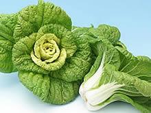 「唐人菜」の画像検索結果