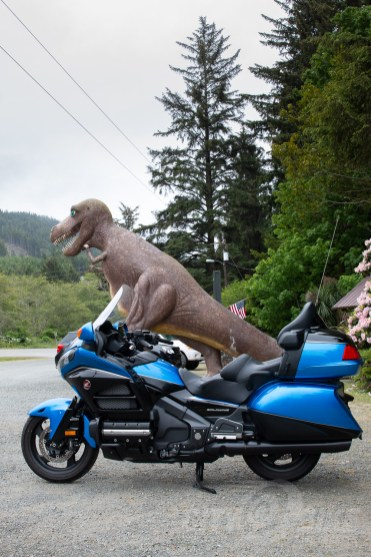 He wanted to go for a ride, but the reach to the bars was too long for T-Rex.