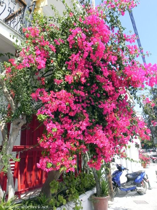 flowers of Skiathos