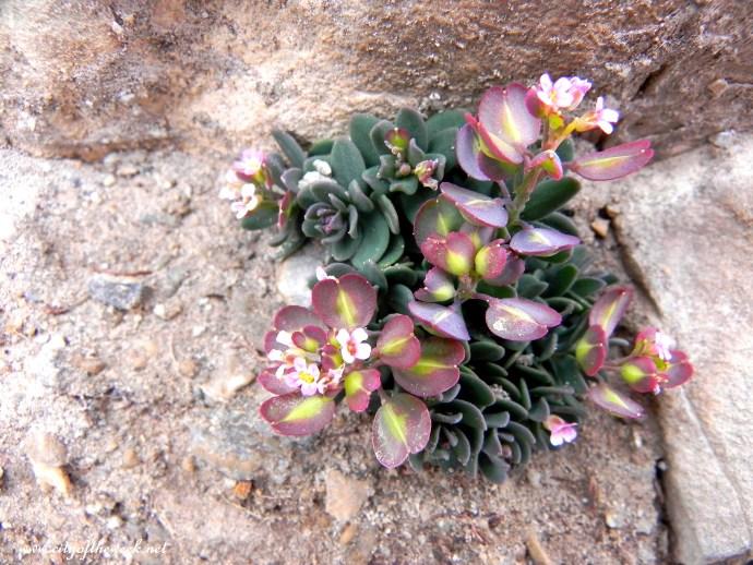 """""""rock""""flower 1"""