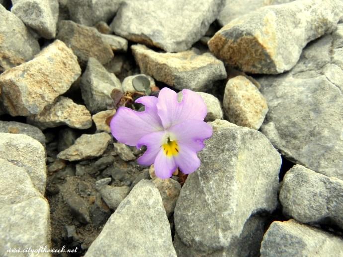 """""""rock""""flower 2"""