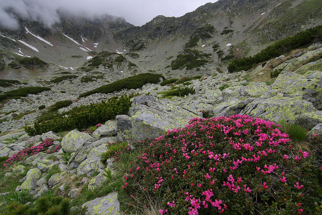 Parang Mountains in full bloom via Flickr by Tzepesh