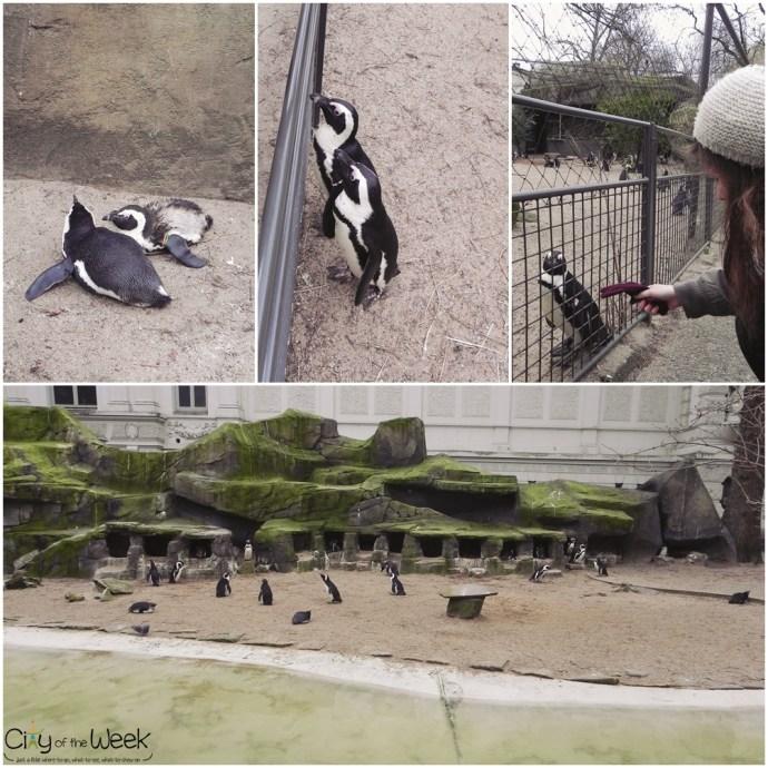 penguins at Artis Zoo Amsterdam