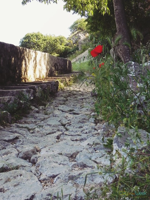 poppies leading the way up towards one of the best views of Kotor Bay