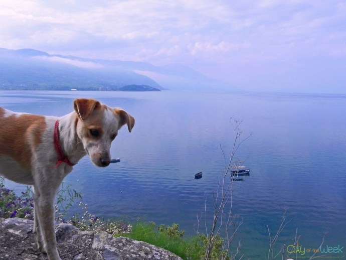 puppy at Ohrid Lake