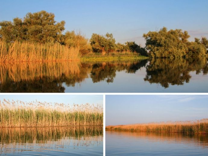 Danube Delta from a Canoe