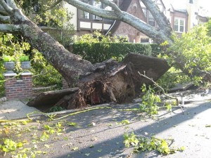 Tree uprooted from a storm and fell on house