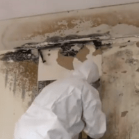 Is it Imperative to Call in Professional Remedial Services to Handle a Mold Condition?