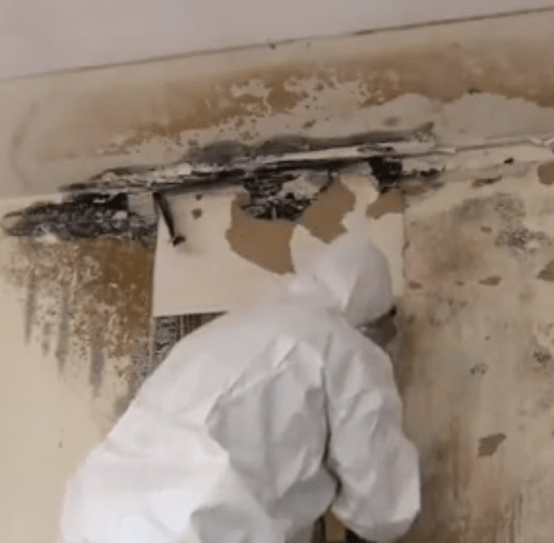 Mold Experts with protective gear cleaning mold off a wall
