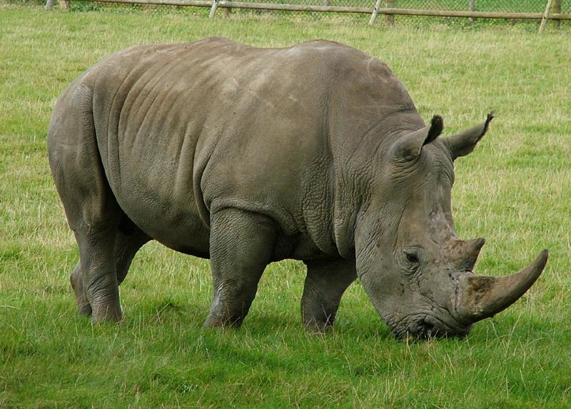 https://i2.wp.com/www.ciudad17.com/Naturaleza/wp-content/uploads/rinoceronte.jpg