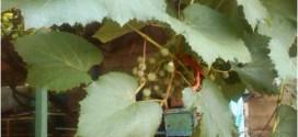Comunidades larenses obtuvieron recursos a través de cosechas endógenas