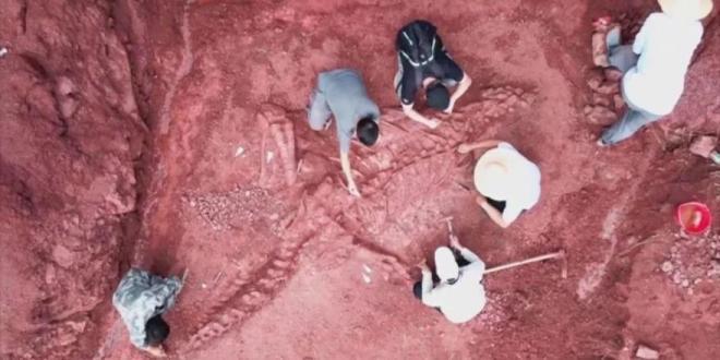 Hallan en China fósil casi completo de dinosaurio del Jurásico