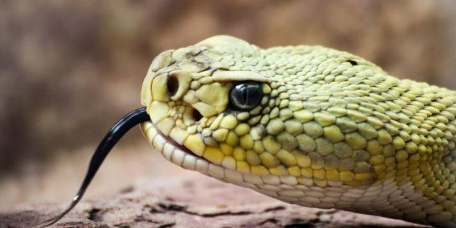 En Lara: Adolescente de 14 años muere luego de ser mordido por una serpiente