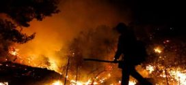 India registró alrededor de 346 mil incendios forestales desde noviembre