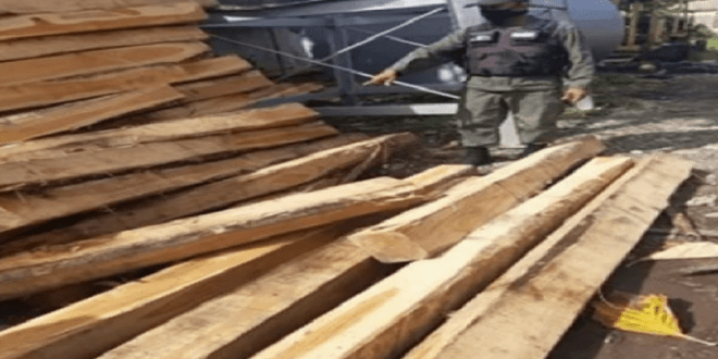 GNB incauta 452 estantillos de madera entre Apure y Barinas