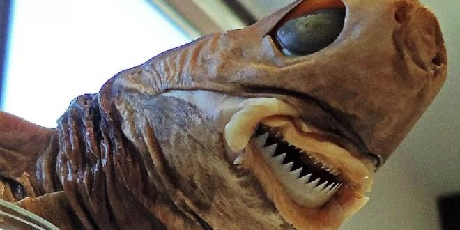 """ENTÉRATE DE ESTO / Conoce al tiburón """"alienígena"""" que devora todo a su paso"""