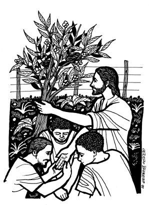 Evangelio segúnn Marcos (4,26-34): En aquel tiempo, Jesús dijo a la multitud: «El Reino de Dios se parece a lo que sucede cuando un hombre siembra la semilla en la tierra: que pasan las noches y los días, y sin que él sepa cómo, la semilla germina y crece; y la tierra, por sí sola, va produciendo el fruto: primero los tallos, luego las espigas y después los granos en las espigas. Y cuando ya están maduros los granos, el hombre echa mano de la hoz, pues ha llegado el tiempo de la cosecha.» Les dijo también: «¿Con qué compararemos el Reino de Dios? ¿Con qué parábola lo podremos representar? Es como una semilla de mostaza que, cuando se siembra, es la más pequeña de las semillas; pero una vez sembrada, crece y se convierte en el mayor de los arbustos y echa ramas tan grandes, que los pájaros pueden anidar a su sombra.» Y con otras muchas parábolas semejantes les estuvo exponiendo su mensaje, de acuerdo con lo que ellos podían entender. Y no les hablaba sino en parábolas; pero a sus discípulos les explicaba todo en privado. Palabra del Seño, del domingo, 14 de junio de 2015