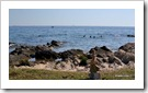 mare, plaja in porec croatia