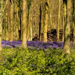 "BLUEBELLS, THE MASTERS' CORRIDOR AND  THE CLAIM FORM:  ""A DRY AND UNLOVELY CROP OF PROCEDURAL SERVICE ISSUES"""