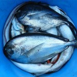 """MORE ON FISH FILES: """"LEAVE THEM IN THE CORNER UNTIL THEY START TO SMELL"""": RECOGNISING THE PROBLEM AND SOLUTIONS"""