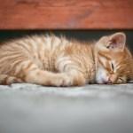 AVOIDING PROCEDURAL PITFALLS - AND PUTTING THEM RIGHT: WEBINAR 6th DECEMBER 2018: HELPING LITIGATORS SLEEP SOUNDLY AT NIGHT...