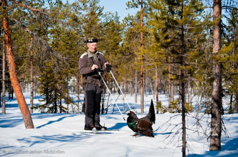 Kurt-Olof keeping the capercaillie at distance