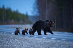 20090508_bear_cubs_0020